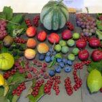 Collection of Fruit - Mr & Mrs D Cooper - DSC02814