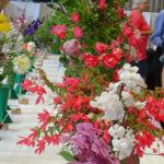 General view flowers - DSC03072